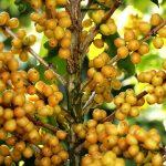 Produtores do Cerrado Mineiro investem no plantio de novas cultivares de café
